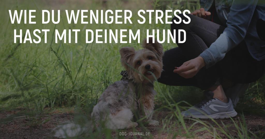 Weniger Stress mit Hund